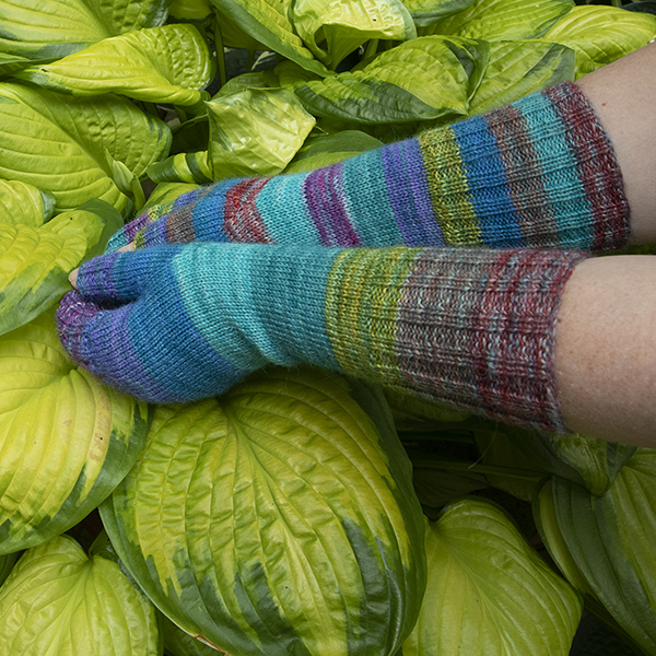 hands wearing striped fingerless mitts touching lime green hosta plant